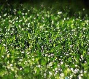 field-1825871_960_720