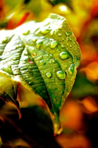 leaf-93163_960_720